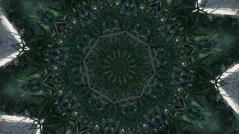 Kaleidoscope Forest Animation