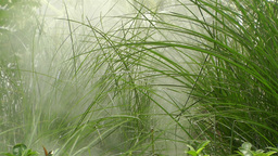 Water Spray In Lush High Grass stock footage