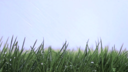 Rain falling in super slow motion on the grass Footage
