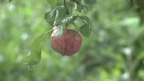 apple to cobweb rack focus Stock Video Footage
