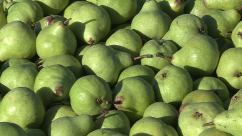 bin of green pears pan Stock Video Footage