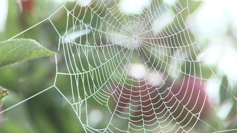 misty cobweb Stock Video Footage