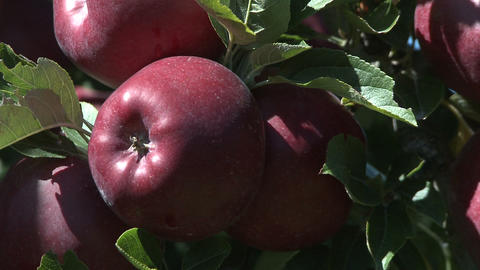 red delicious apple zoom back Footage