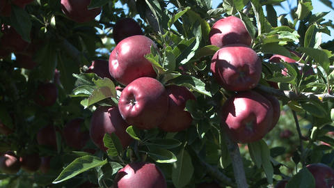 red delicious apple zoom back Stock Video Footage