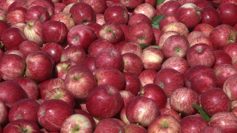 royal gala apples in a bin Stock Video Footage