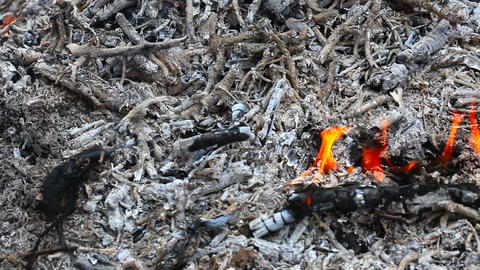 The fire, embers and ash Stock Video Footage