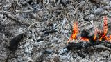 The Fire, Embers And Ash stock footage