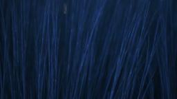 Blue Grass Footage