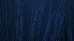 Blue Grass Stock Video Footage