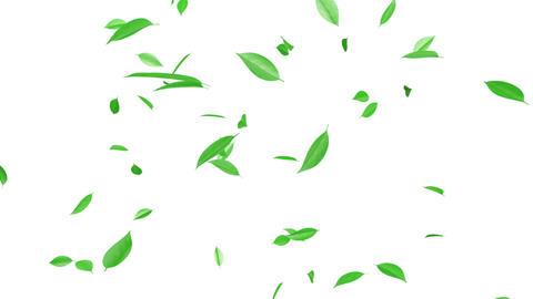 Leaf A w HD Stock Video Footage