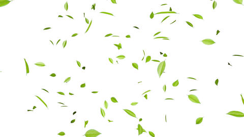 Leaf A1 w HD Animation