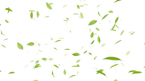 Leaf A2 w HD Animation