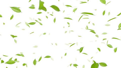 Leaf A2 w HD Stock Video Footage