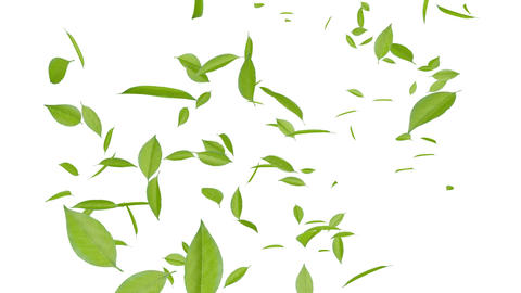 Leaf A3 w HD Stock Video Footage