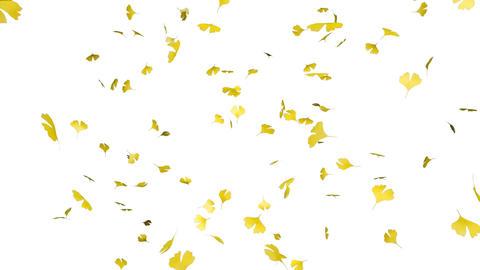 Leaf B1 w HD Stock Video Footage