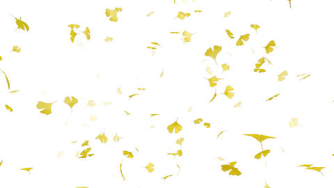 Leaf B2 w HD Animation