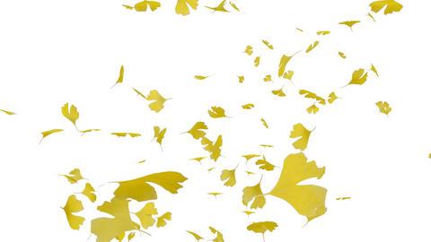 Leaf B3 w HD Stock Video Footage