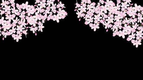Sakura 2 Bm HD Stock Video Footage