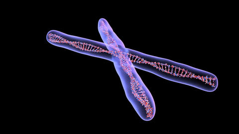 chromosome 1 Animation