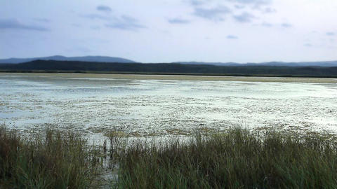 Reeds on lake bed at dusk - dawn Stock Video Footage