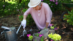 Retired woman planting flowers Stock Video Footage