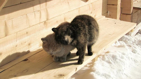 Two cats are freezing Live Action
