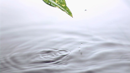 Leaf going out in super slow motion of water Footage