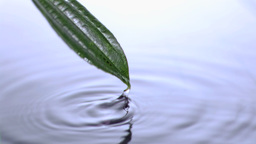 Leaf spouting in super slow motion from water Stock Video Footage