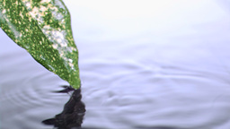 Water drops falling in super slow motion from the Stock Video Footage