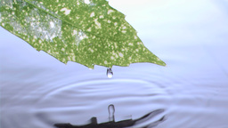 Drops flowing in super slow motion from the leaf Stock Video Footage