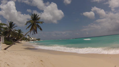 palm tree on the caribean beach Footage