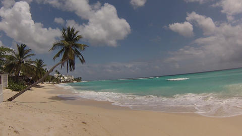 palm tree on the caribean beach Stock Video Footage