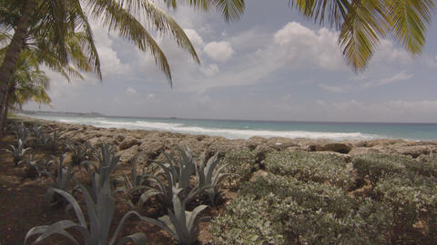 Barbados Seawalk Near The Cruise Ship Pier stock footage