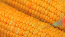 Syringe injecting a product in corn Stock Video Footage