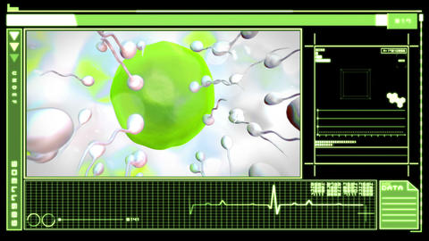 Medical Digital Interface Showing Egg Cell Fertili stock footage