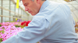 Gardener sorting plants Footage