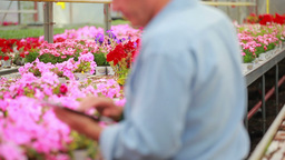 Man working at a greenhouse holding a tablet pc Stock Video Footage