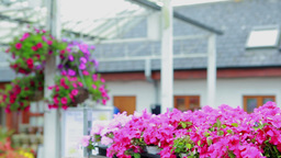 Woman working at the garden centre at the flower s Stock Video Footage