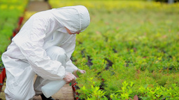 Gardener wearing protection suit spraying the plan Stock Video Footage