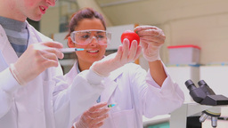 Couple of students injecting liquid in tomato whil Footage