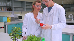 Students injecting liquid in a tomato Footage