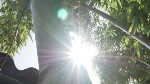 1844 Bamboo Blowing in the Wind with Sun Flare, HD Footage