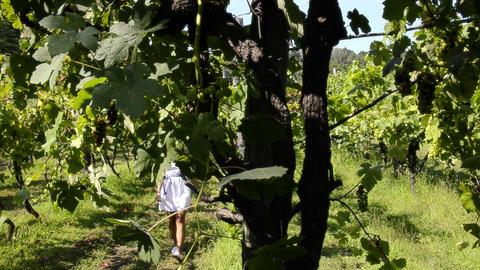 a walk through the vineyards Footage