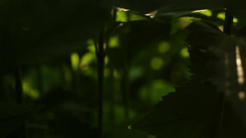 Green flower leafs with sunbeams Stock Video Footage