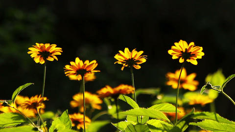 Summer flowers blooming Stock Video Footage