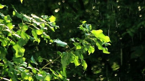 Green leafs under the spring rain Footage