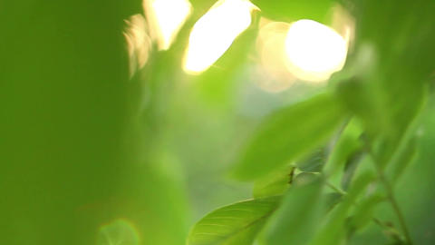 Green leafs with cool sunbeams Footage