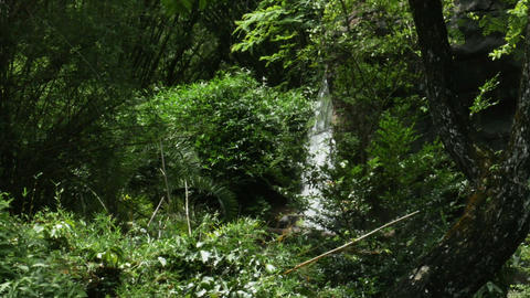 1908 Waterfall in the Tropics, HD Footage