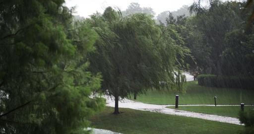 1922 Heavy Rain Storm with Trees, 4K Footage