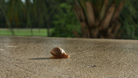 1928 Snail Crawling TImelapse, HD Footage